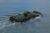 amphibious-combat-vehicle-1-1-acv-1-4-1